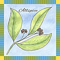 Allspice Illustration by Christy Beckwith