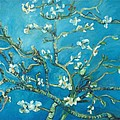 Almond Blossom Branches Print by Eric  Schiabor