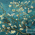 Almond Blossoms' Reproduction by Tim Gilliland