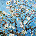 Almond Blossoms  by Tom Roderick