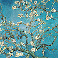 Almond Branches In Bloom by Vincent van Gogh