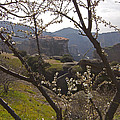 Almond Tree And Monastery   #9815 by J L Woody Wooden