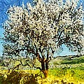 Almond Tree by Dragica  Micki Fortuna
