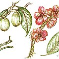 Almond With Flowers by Teresa White