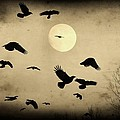 Almost Full Moon And Crows by Gothicrow Images