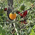 Almost Harvest Time by Deborah Adkins