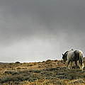 Alone - Wild Horse - Green Mountain - Wyoming by Diane Mintle