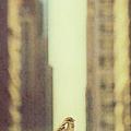 Alone In A Big City by Margie Hurwich