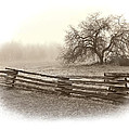 Alone In The Field by Kasandra Sproson