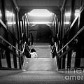 Alone by Miriam Danar