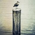 Alone by Venetta Archer
