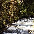 Along American River by Edward Hawkins II