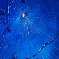 Along Came A Spider. by Richard Brooks