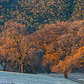 Along Miwok Trail In Winter by Marc Crumpler