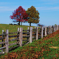 Along The Fence by Eric Liller