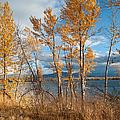 Along The Lake by Fran Riley