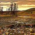 Along The Larmar River by Marty Koch
