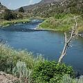 Along The Rio Grande River by Lucinda Walter