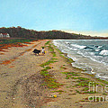 Along The Shore In Hyde Hole Beach Rhode Island by Christopher Shellhammer