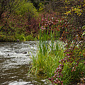Along The Stream by Gary Benson