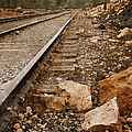 Along The Tracks by Margie Hurwich