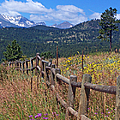 Along The Wooden Fence by Jennifer Robin