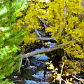 Alpine Creek  by L J Oakes