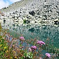 Alpine Lake And Flora by Cristina Stefan