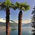 Alpine Lake With Island by Mats Silvan