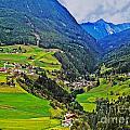 Alpine Meadow by Elvis Vaughn