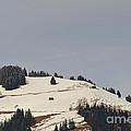 Alpine Pasture by Felicia Tica