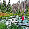 Alpine Pond On Alpine Pond Trail In Cedar Breaks National Monument-utah by Ruth Hager
