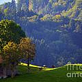 Alpine Summer Scene In Switzerland by Susanne Van Hulst