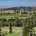 Alpine View by Robert Bales