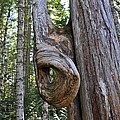 Altered Tree Trunk Growth by Tikvah's Hope