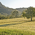Amaroo Landscape - Paisaje De Amaroo by Felix Mazo