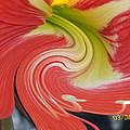 Amarylis Twirl by Belinda Lee