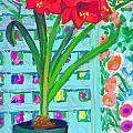 Amaryllis by Candace Lovely