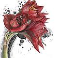 Amaryllis Flowers - 2. -  Elena Yakubovich by Elena Yakubovich