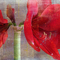 Amaryllis In The Rough by Larry Bishop