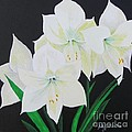 Amaryllis by Sally Rice