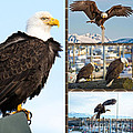 Amazing Bald Eagles by Debra  Miller