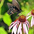 Amazing Butterfly by Marty Koch