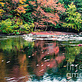 Amazing Fall Foliage Along A River In New England by Edward Fielding