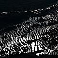 Amazing Rice Terrace In Black And White by Kim Pin Tan