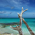Wishing Bone Beach Scene by Robyn Saunders