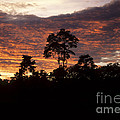 Amazon Sunset by James Brunker