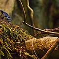 Amazon Tree Boa by Eti Reid