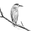 Amazonian Heron Black And White by Ramona Murdock