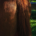 Amber Horse Tail by Tikvah's Hope
